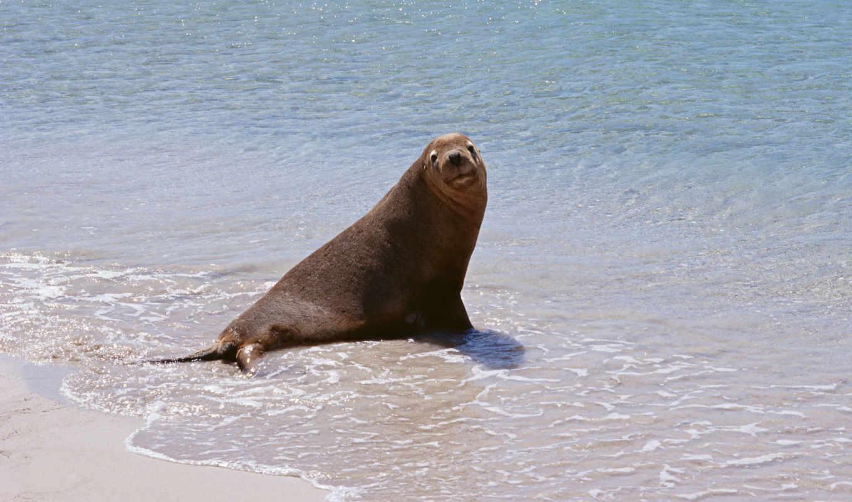 котик, берегу, животные, со, мной, хотите, морской, animal, изображение, морские, позирует, песок, волны, жители, download, просмотров, picsfab, картинок, фабрика,