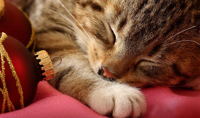 спит, новый, год, cats, котенок, animals, котик, животные, открытки, картинка,