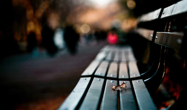 лист, фокус, лавка, парк, закат