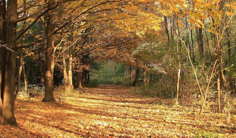 осень, листья, природа, лес, landscape, листва,