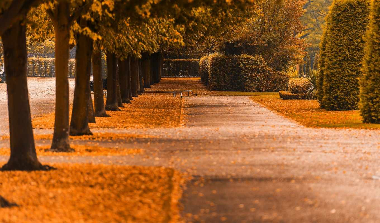 осень, dubstep, аллеи, play, парка, damascus, google, time,