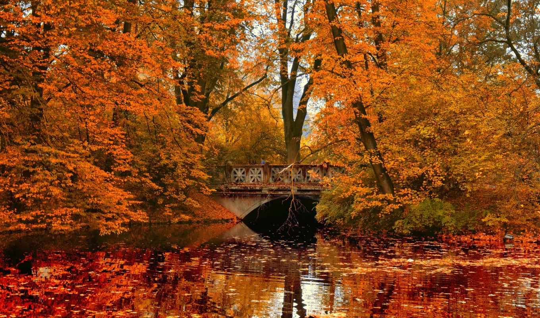 осень, park, trees, листва, мост, природа, река, отражение,