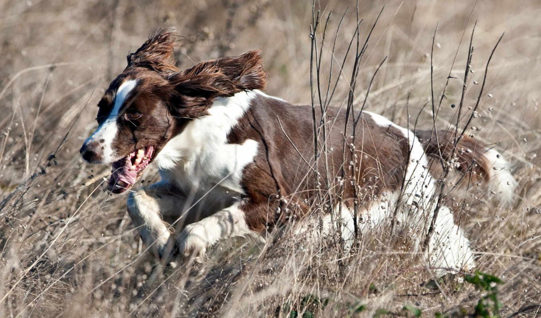 поле, собака, котенок, разных, run, небольшая, породы,