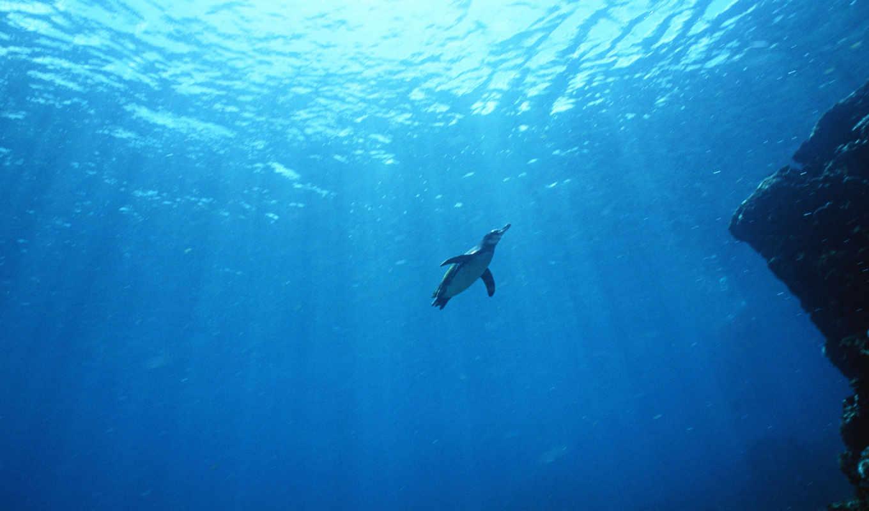 пингвин, sharm, sheikh, water,
