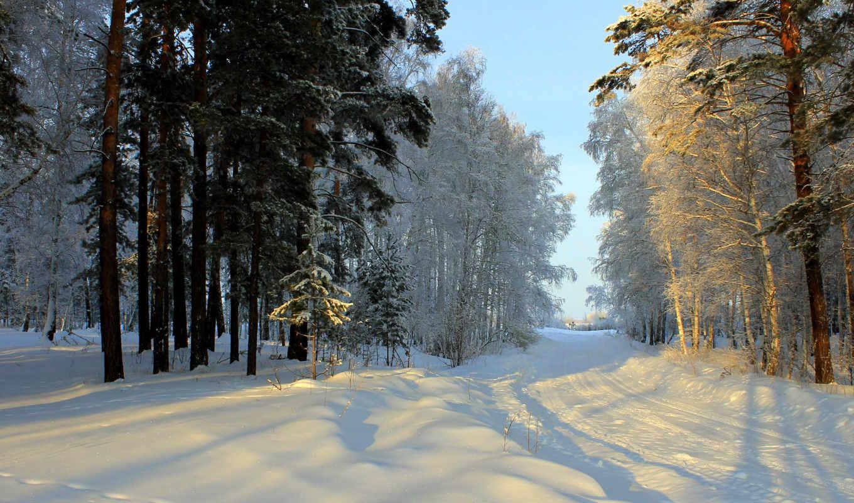 las, droga, зима, природа, zima, времена, снег, деревья, года,