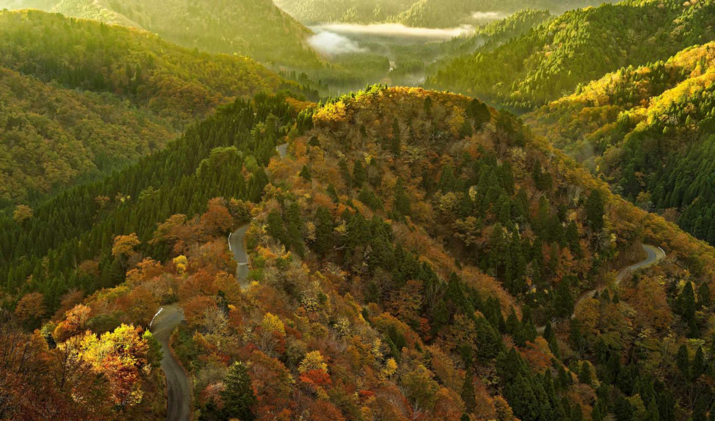 горы, trees, лес, ordered, дорога, страница, небо, browsing,