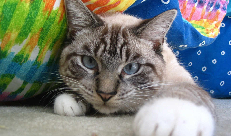 лапы, очень, лапа, нравится, feline, имеют, кошек, кошачьих, лапки, кошки, одновременно,