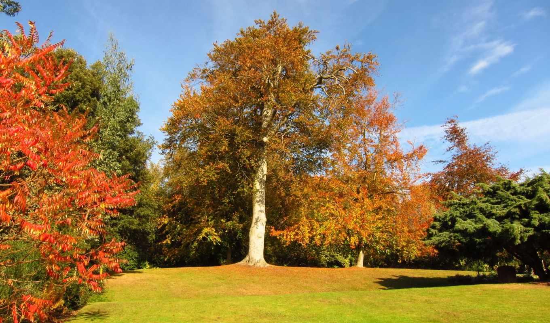 картинка, трава, природа, trees, осень, листва, изображение,