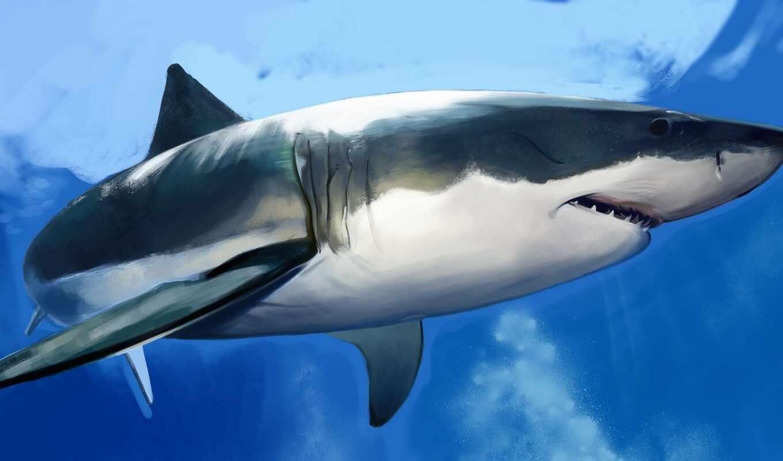 акула, под, water, fish