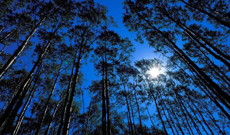 картинка, небо, деревья, свет, sun,