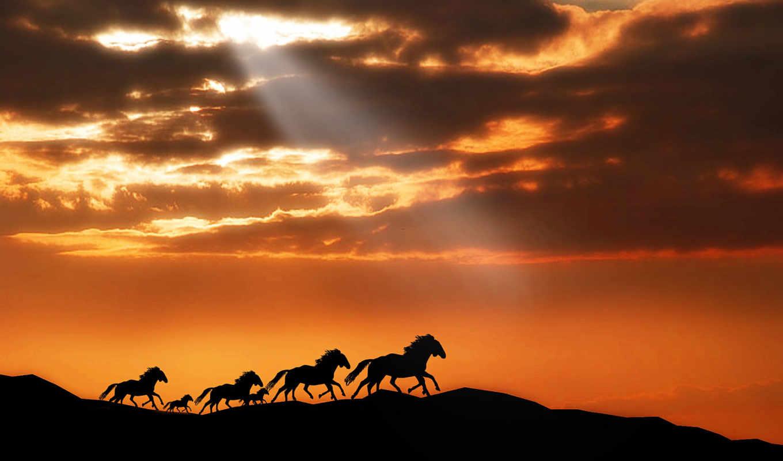 лошади, лошадь, windows, небо,