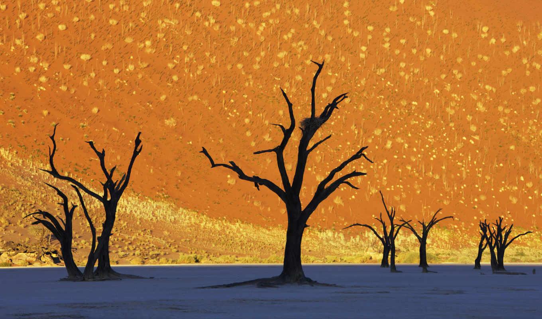 dead, vlei, namibia, the, trees, namib, знаменитая