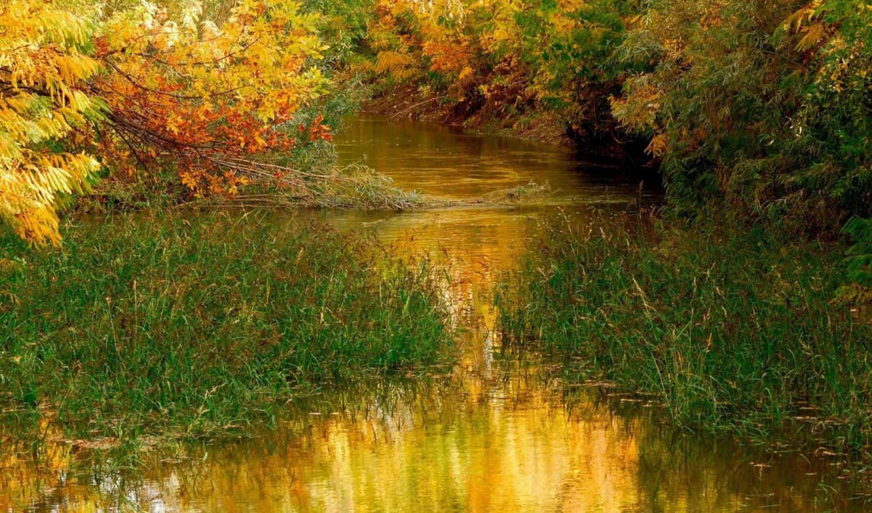 осень, природа, деревья, листья,