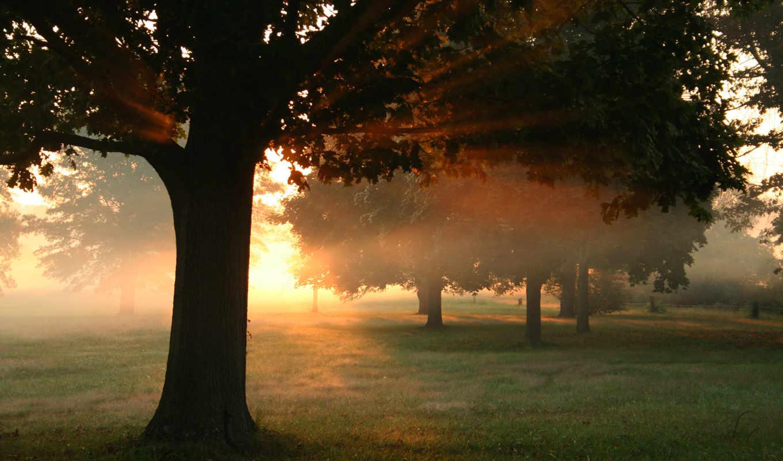 листья, осень, sun, деревя, лес, лучи, природа, трава, дорога, свет,