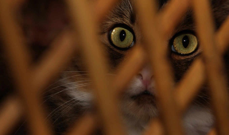 zhivotnye, нояб, кошки, apácarács, удивление, широкоформатные,