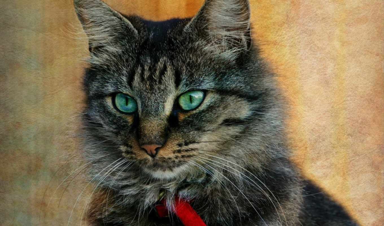 striped, ковёр, текстура, cats, серый, кот, fish, portrait, ошейник,