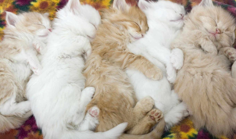 kittens, animals, котята, sleeping, picture, kids, tenderness, спят, код, нравится, запись, free,