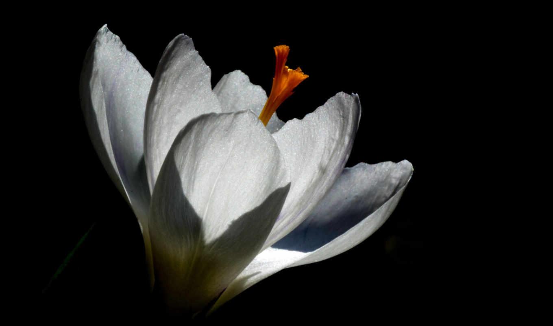 макро, pictures, весна, цветы,