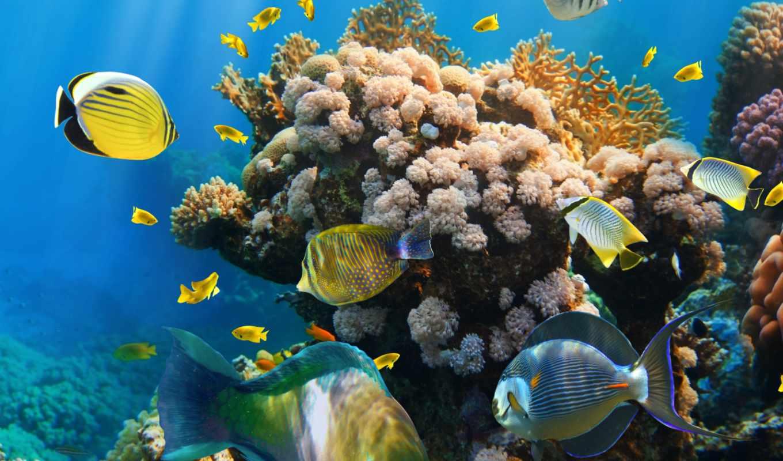 world, underwater, риф, клипарт, coral, растровый, ocean, море, морские,