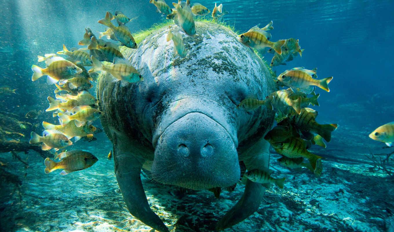 world, себе, better, гладь, humanity, bottom, луны, many, underwater, загадок, таит, изучило, океанов,