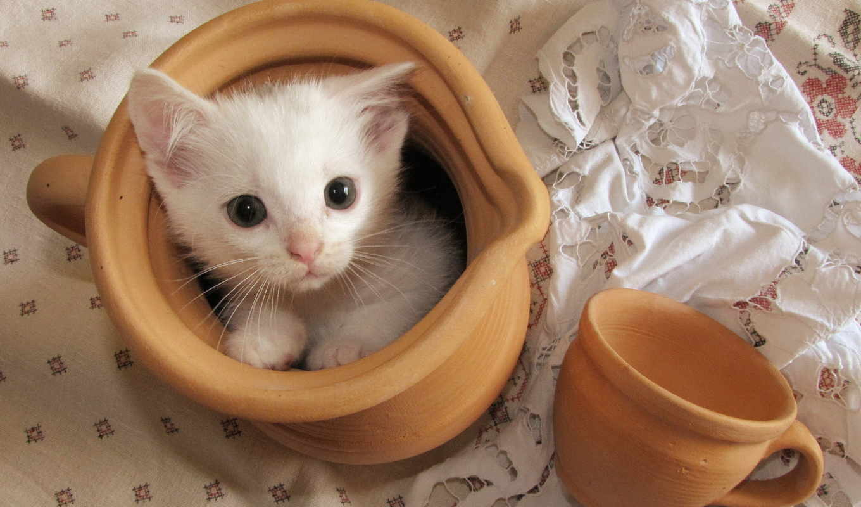 кот, котята, cup, взгляд, широкоформатные,