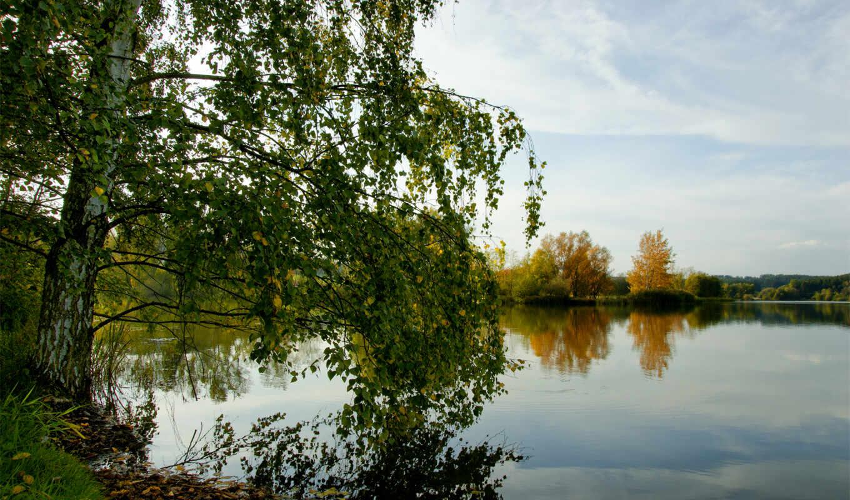 береза, березы, река, природа,