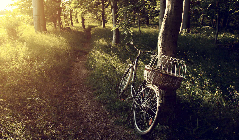 , велосипед, прогулка, тропинка, фон, une, ecran, экран, fond,