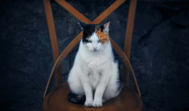 кот, white