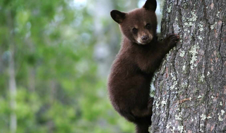 дерево, медведь