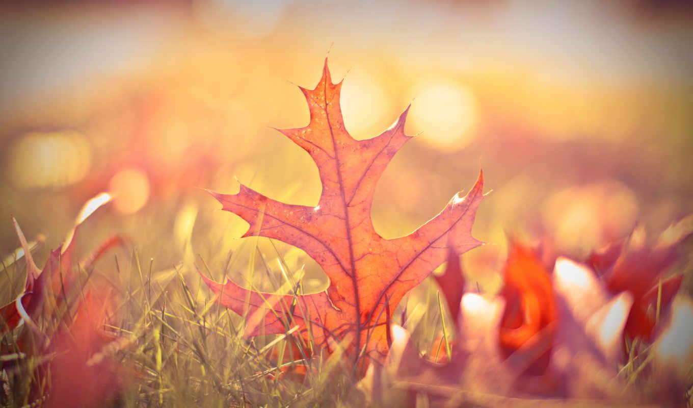 боке, листья, осень, размытость, макро, трава,