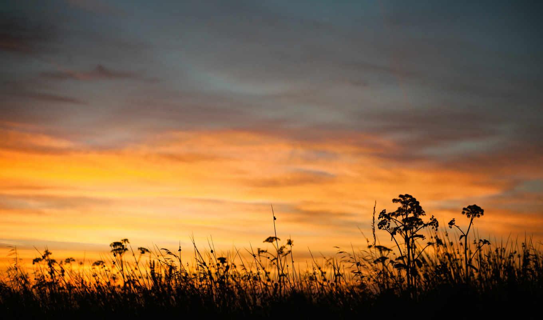 природа, вечер, лето, сумерки, закат, небо, трава,