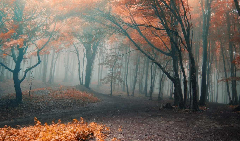 лес, осень, туман, большая, фото, леса, откройте, ссылку, осеннего, деревья, лесу,
