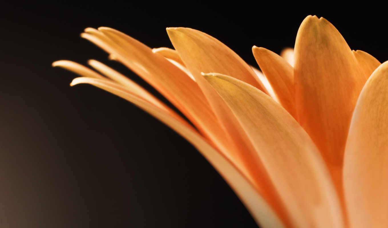 цветя, красиві, flowers, макро, black, следы, white,