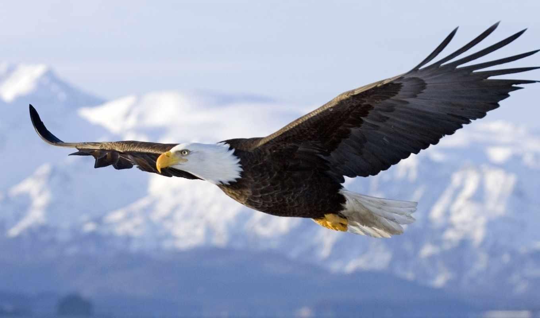 орлан, небо, wings, птица, art, летит, порит,