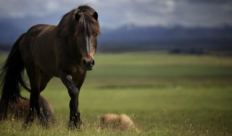 аватар, stallion, id, лошадь, forum
