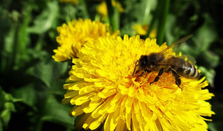 flowers, flower, pollen, pictures, bee, macro,