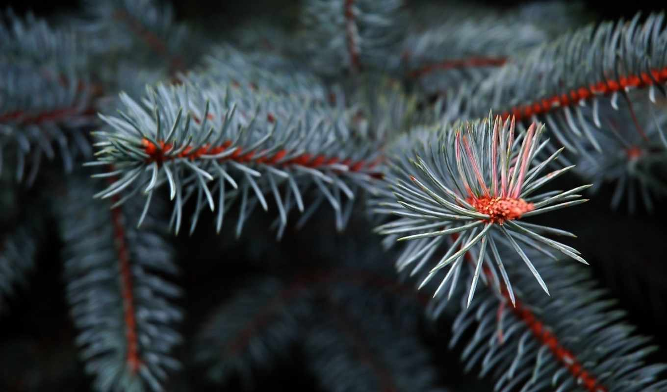 file, with, exotic, original, pixel, desktop, size, resolution, pine,