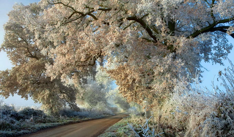 иней, осень, дорога, деревья,