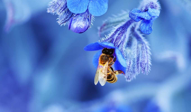 цветы, пчелка, макро, розы, коровка, божья,