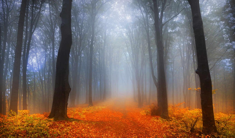 осень, foggy, лес, desktop,