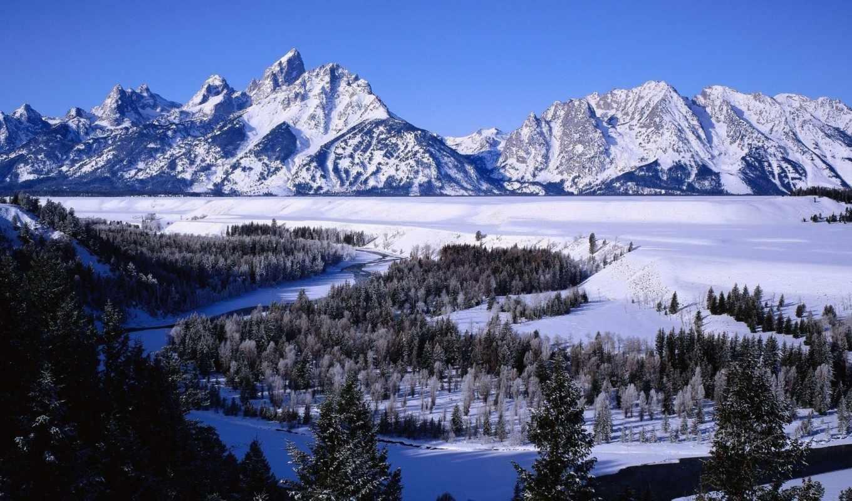 горы, река, national, park, grand, лес, природа, teton, цветы, сша,