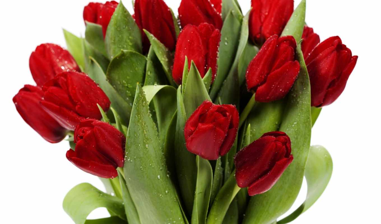 тюльпанов, букет, букеты, цветов, красных, fone, белых, цветы, капельках, разных,