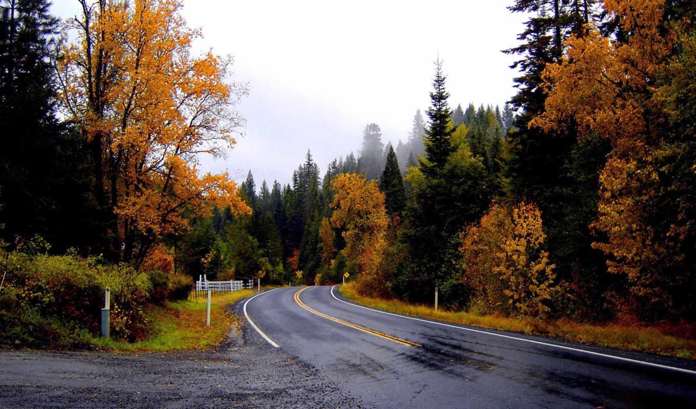 осень, асфальт, дорога,дождь