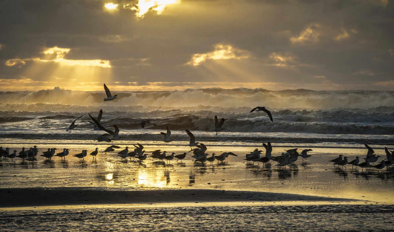 берег, небо, чайки, волны, свет, птицы, пляж, лучи, море, картинку,