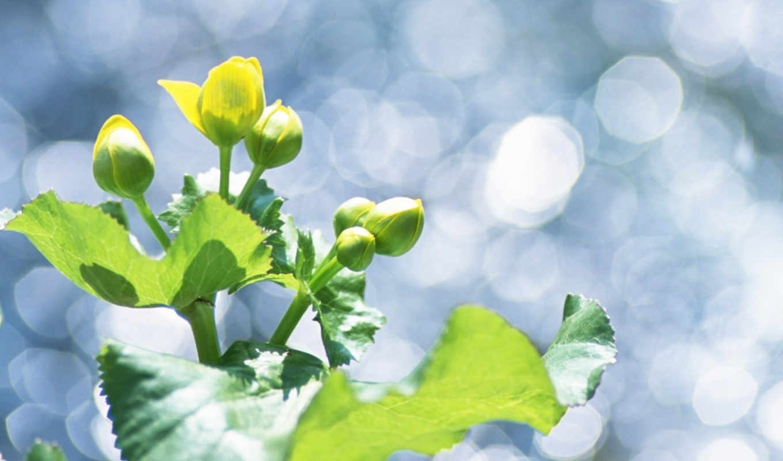 green, leaves, soft, focus, блики, растение, трава, photography, pure, fresh, мм, цветы, бутоны, макро, код, природа, ôõã,