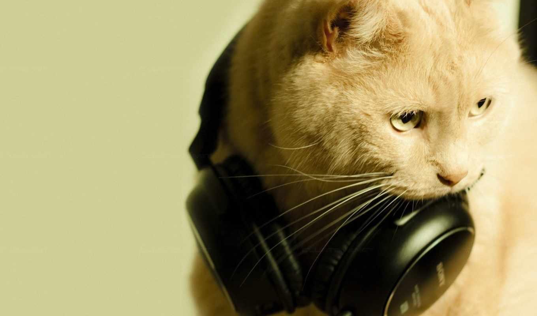 кот, наушники, макро, headphones, музыка, картинка, sống, animal, with,