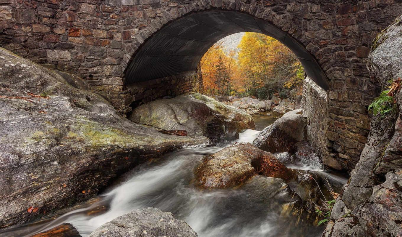 pictures, page, posted, лес, bridge, дек, photos, природа,