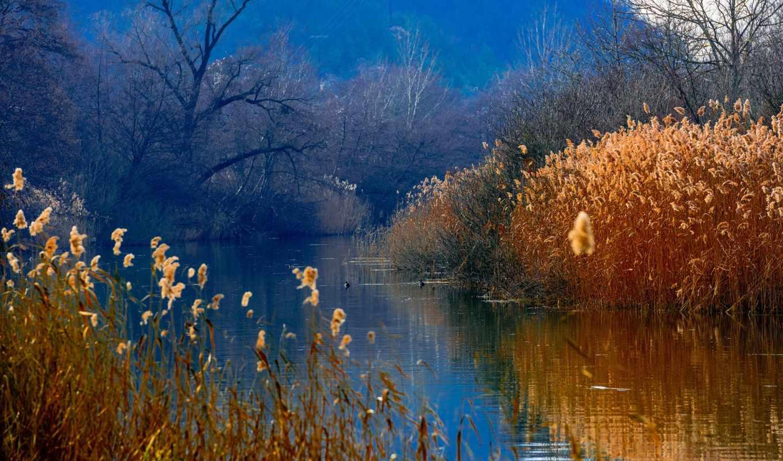 denigmo, loading, ducks, горы, лес, озеро, камыш, красивый,