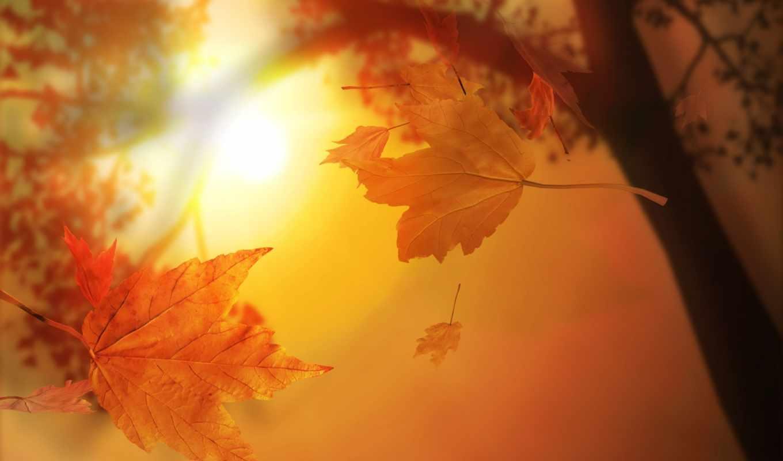 осенние, листва, осень,