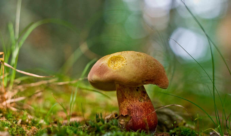 природа, mushroom, free, зелёный,